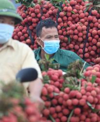 Bắc Giang đã bán hơn 100.000 tấn vải thiều